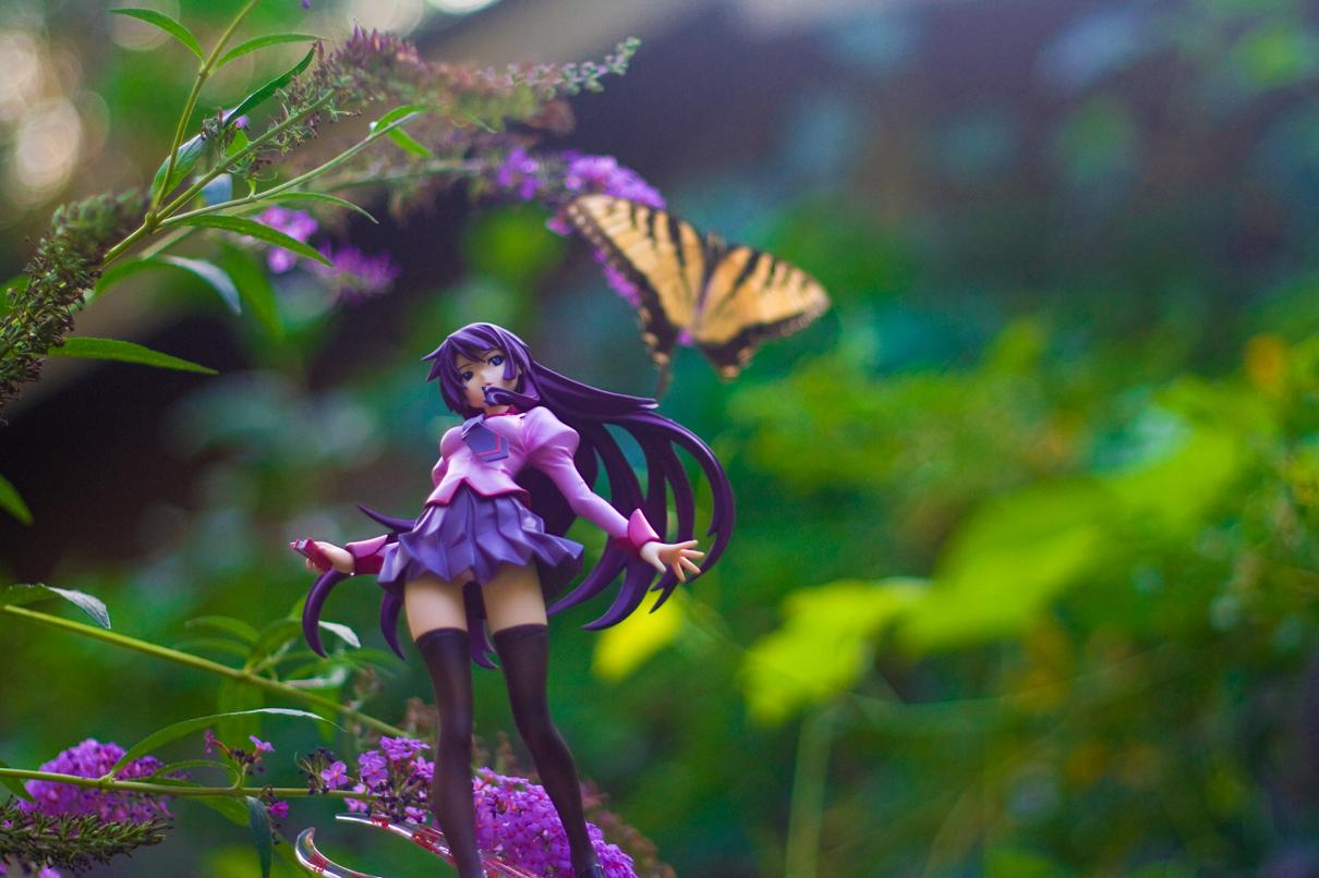 flowers butterfly hitagi