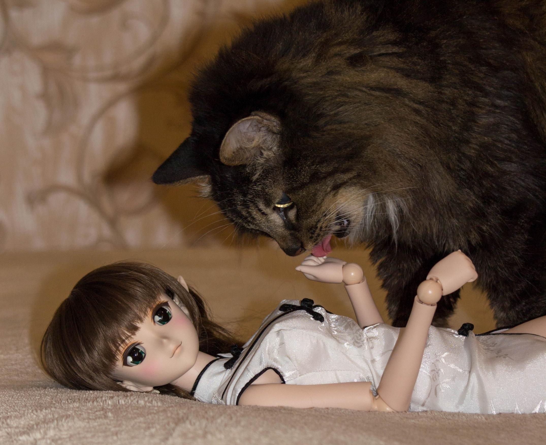 cat volks pointed_ears dollfie_dream elven_ears zoukei-mura doll_part elfear